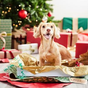 Chewy 圣诞节宠物零食专场