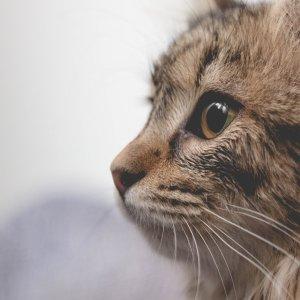 全场8.5折 + 免邮PetCareSupplies 猫咪驱虫药促销热卖