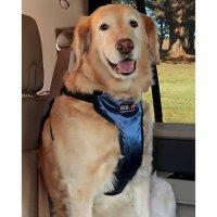 车用宠物安全背带