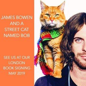 立减£5!现场撸猫简直不能更刺激啦!折扣升级:LondonCats International Show 伦敦国际名猫展门票开售
