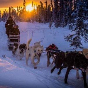 Lulutrip<阿拉斯加追极光必选1日>【玻璃极光屋营地狗拉雪橇】含往返巴士, 提供御寒服, 丰富营地特色活动可选