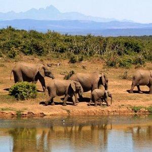 $2399起 含机票+交通+餐饮+游览南非9天旅行套餐  含特色野生动物Safrari之旅