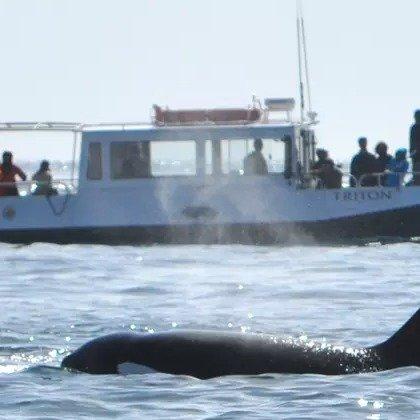 西雅图 3.5小时观鲸之旅