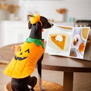 满$60享8折Chewy 多款宠物食品及用品促销