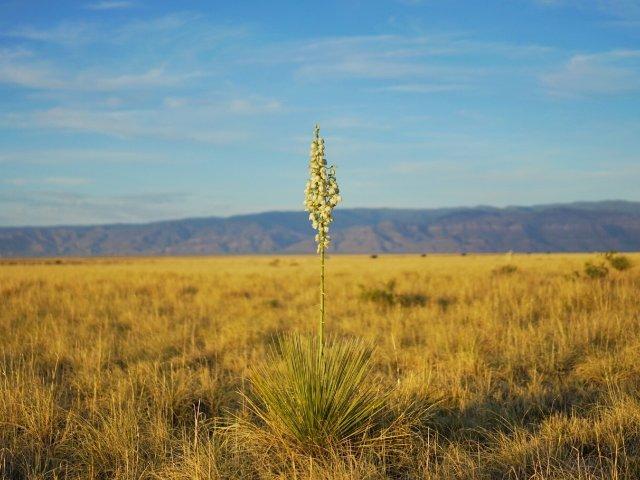 拍照去哪里?新墨西哥州了解一下