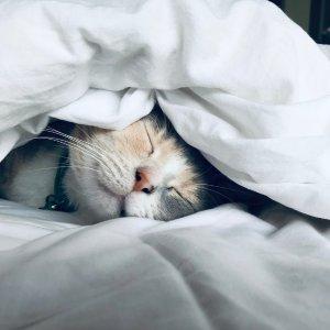 低至4折Petco 多款舒适宠物床促销