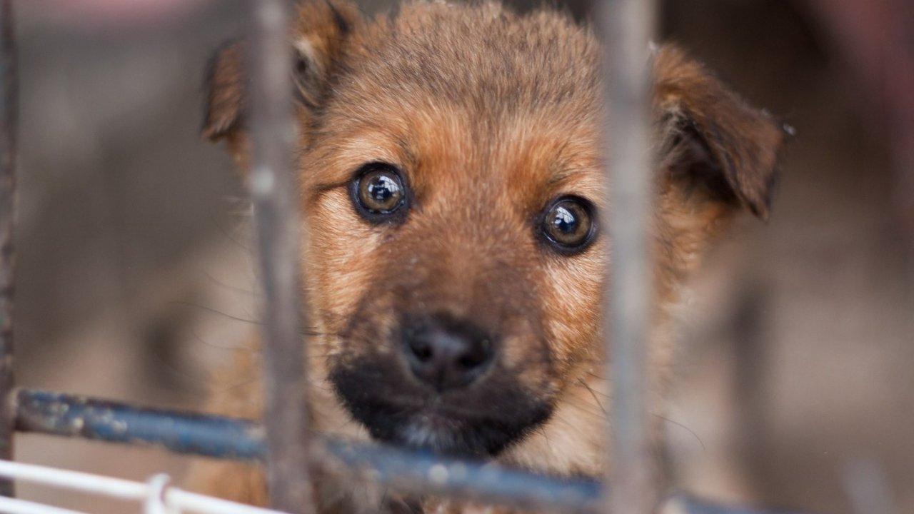 法国宠物领养网站大全 | 可爱的猫猫狗狗在这儿可以领养到!
