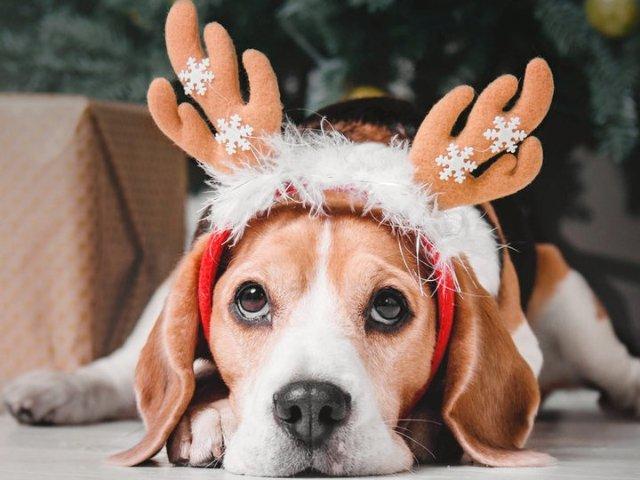 毛小孩的圣诞愿望清单 - 狗狗Ch...