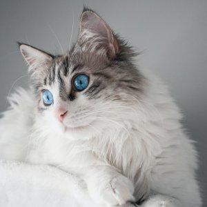 猫主子觉得可宠物知多少 新晋铲屎官上任必购清单