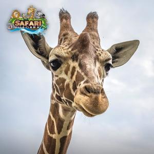 单人折$31.6 去喂小动物啦Safari Niagara 尼亚加拉野生动物园门票7.4折 快乐家庭日