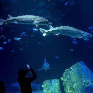 $22.45起纽约水族馆门票 近距离观赏鲨鱼及上百种海洋生物