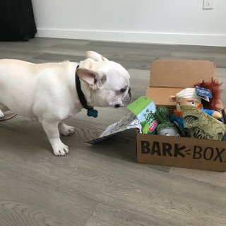 爱我就对了!Barkbox,每月按时宠溺我的小主子