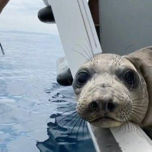 圣地亚哥海洋世界 两日票夏季特惠 第二天免费入园