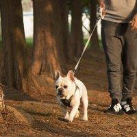 小佩PETKIT防爆冲胸背带二代狗狗牵引绳中小型犬 【美国包邮】
