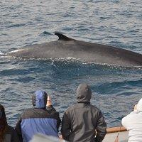 San Diego 2.5小时观鲸游轮 圣地亚哥出发