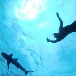 低至7.2折 $110/人 可全额退款夏威夷非笼式观鲨 1.5小时远洋浮潜 愿望清单级人生体验