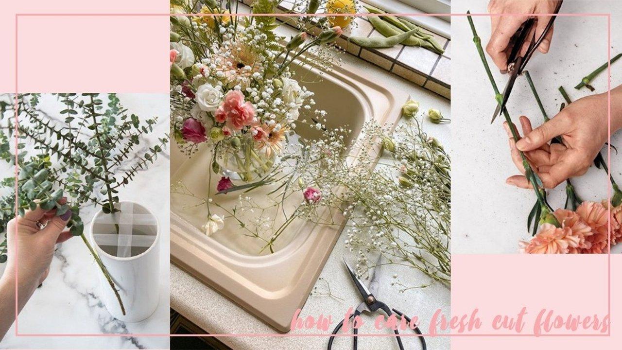 鲜切花买回家后如何养护?醒花、修剪、插瓶、日常养护小tips