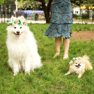 BARKSHOPFlower Crown Bungee Dog Toy – BarkShop