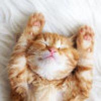 猫仔仔要睡懒觉