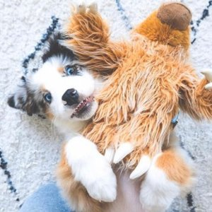 Extra 20% OffBarkShop Selected Pet Products on Sale