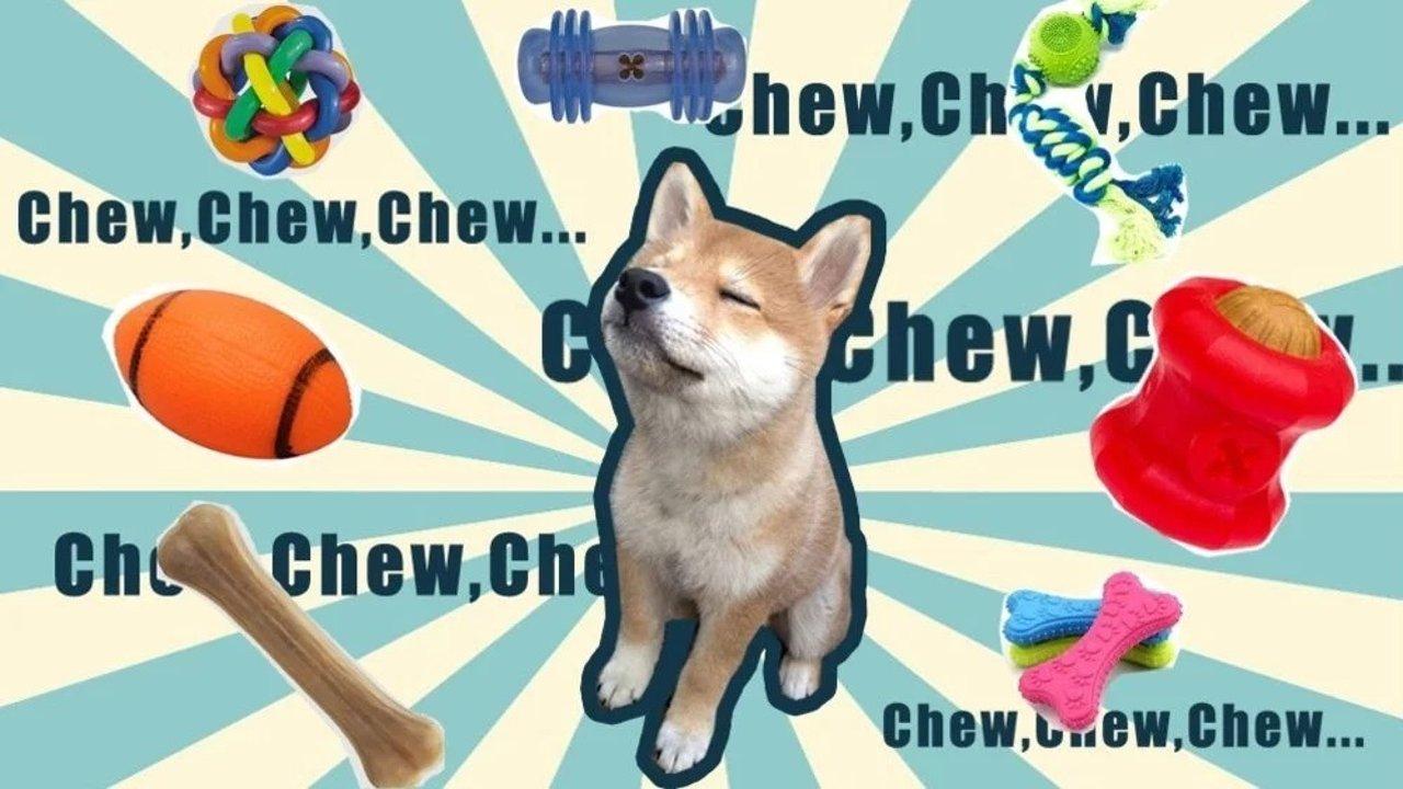狗狗磨牙二三事,原来Dog Chews有这么多选择!