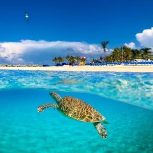 仅$99起 海景舱$129起  第三四人免费5晚巴哈马游轮 迈阿密往返 搭乘近期翻新诺唯真天空号