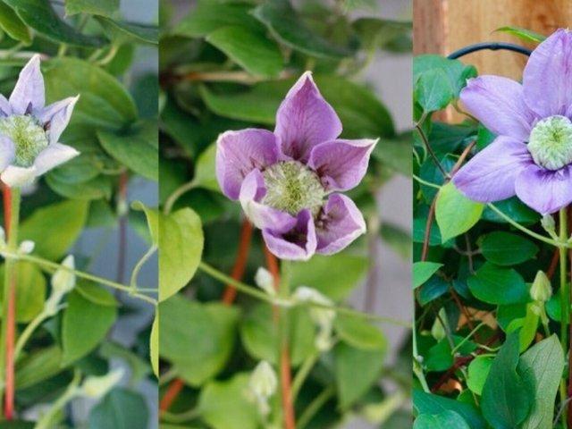屋里屋外,让花草植物带给你一季艳阳夏