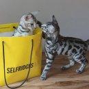 低至3折!£140收新秀丽四轮登机箱上新:Selfridges 全场大牌夏日大促 YSL、Strathberry、Bose都有