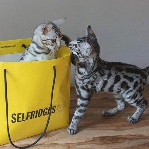 低至3折 Jellycat毛绒兔兔仅£12!Selfridges 全场大牌夏日大促 Allsaints、Sandro都有