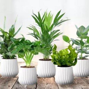 3.4折起 €19.99收四件套绿植盆栽套装热卖 装饰房间 净化空气好帮手 生活增添盎然生机