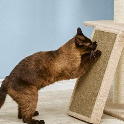 Up to 57% OffPetco Cat Scratching Posts on Sale