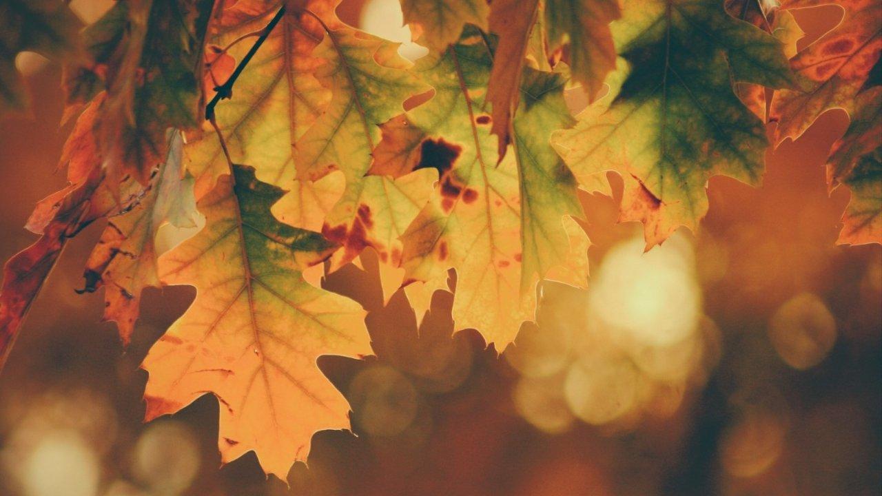 巴黎哪儿赏秋最美?这些地方可以看到美丽的落叶和秋景!