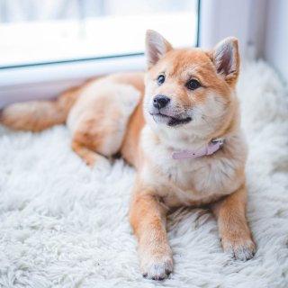 Up to 40% OffPetco Selected Dog Beds on Sale