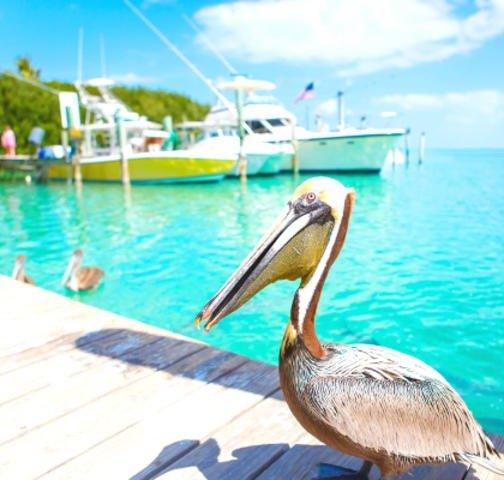 迈阿密旅游通票