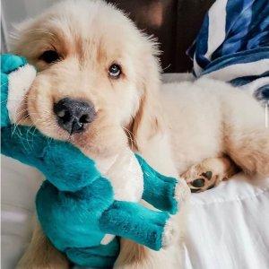 $6.73收发声玩具球4个狗子们最爱玩的玩具大推荐 内附玩具分析 铲屎官的必修课