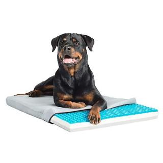 低至5折 + 满$85享额外8折Petco 精选狗狗夏日降暑用品促销