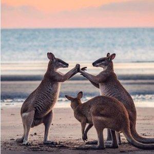 无体验无青春 专享澳洲生活3.21更新:当你离开澳洲,会不会后悔这些事情没来得及做?