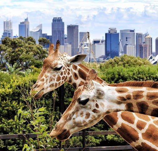 悉尼旅游通票