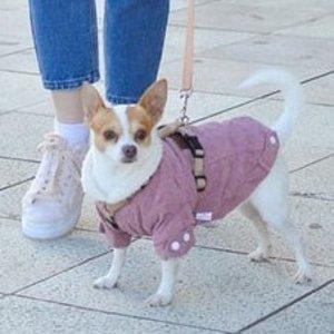 Petco 宠物秋季服饰促销热卖