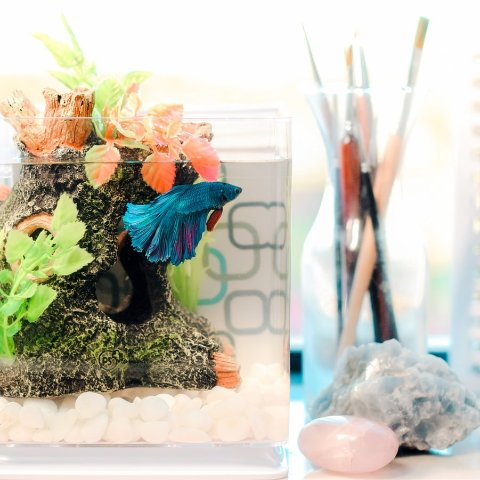 Up to 41% OffPetco Aquarium Decor on Sale