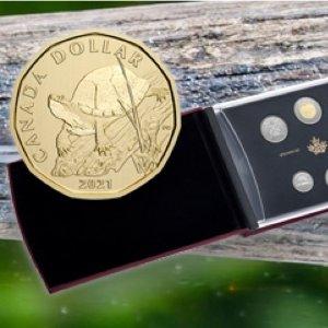 $59.95(正面伊丽莎白女王二世)2021年濒危物种:BLANDING'S海龟 纪念币-标本集