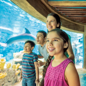 As low as $59.99San Antonio SeaWorld + All-Day Dining Deal