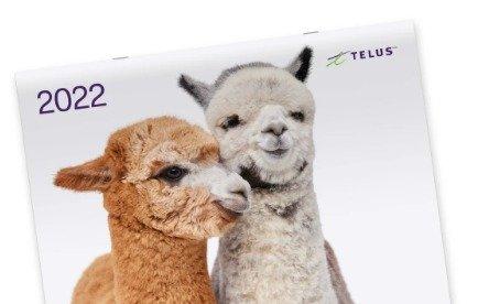 TELUS 免费送萌萌的2022动物日历啦TELUS 免费送萌萌的2022动物日历啦