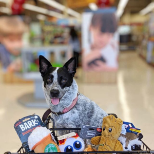 Up to 50% OffPetco Dog Toys on Sale