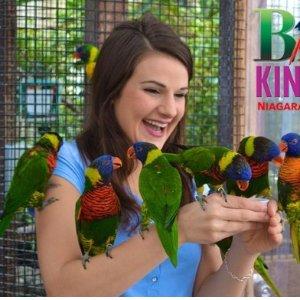 儿童票 $12.5周末好去处 Bird Kingdom 全世界最大自由飞行室内鸟类乐园