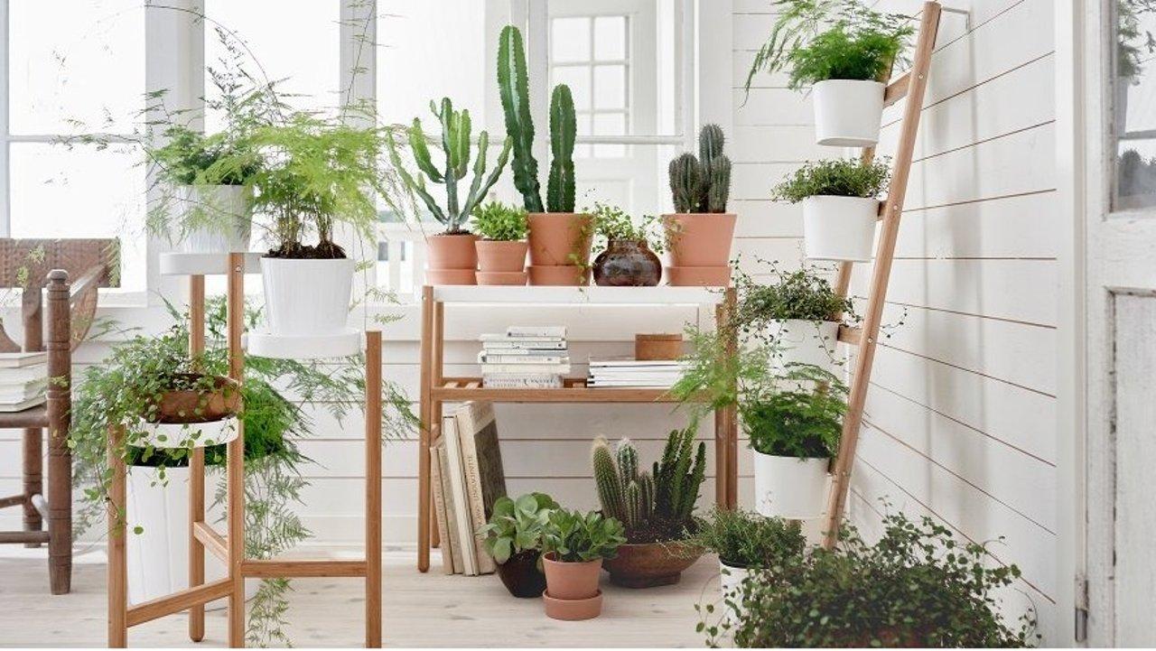 法国常见的室内植物和养殖方法大全   手把手教你打造理想的小屋