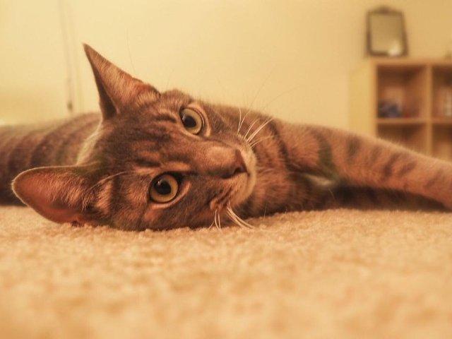 一个妈癌患者的养猫心得