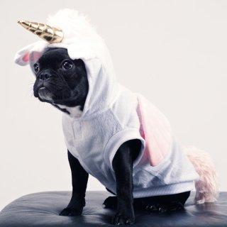 低至7折Rubie's Costume Company 精选宠物服饰促销热卖