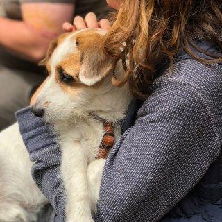 低至6折Petco 拥抱狗狗节日 全场大促销