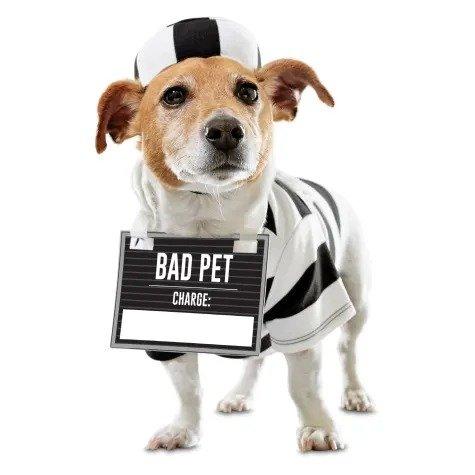 坏宠物造型狗狗服饰